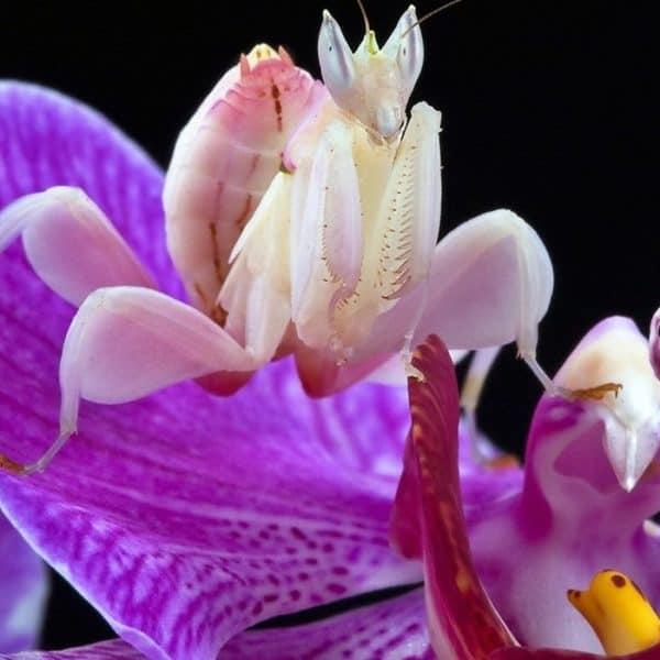 Редкий вид орхидей