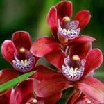 Редкие красивые цветы
