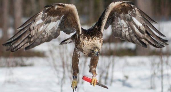 Опасные для человека птицы