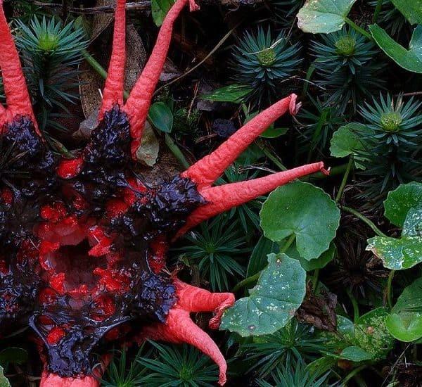 Странные растения