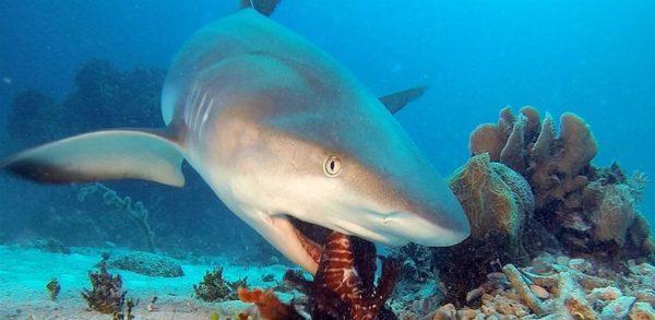 Самые страшные акулы