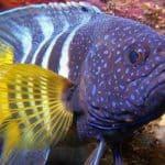 Глубоководные светящиеся рыбы