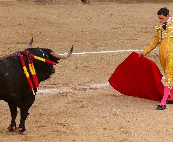 Бой с быками