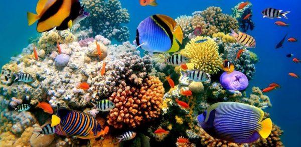 Красивые морские рыбы