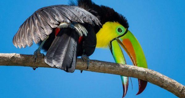 Птицы с большим клювом