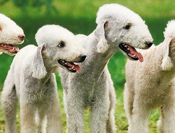 Интересные породы собак