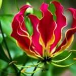 Красивые редкие цветы