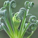 Интересные растения