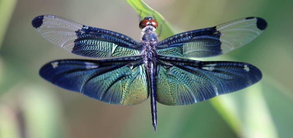 Красивая стрекоза