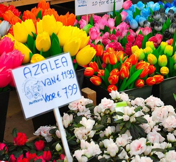 Тюльпаны в Bloemenmarkt