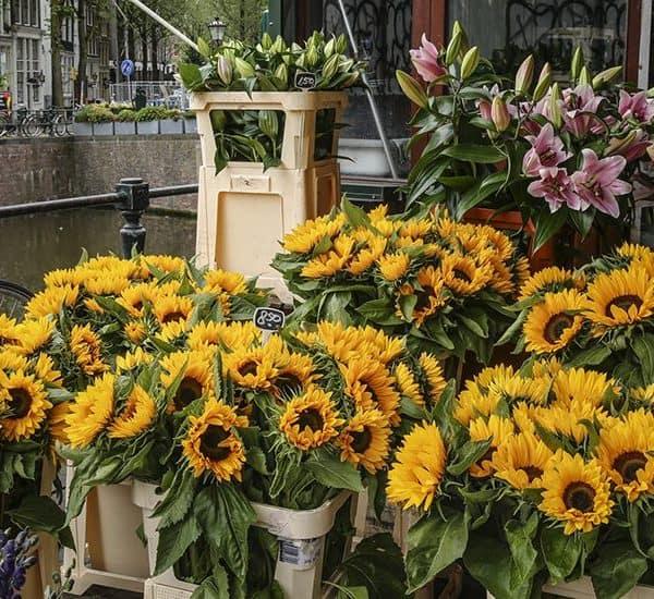Цветы в Bloemenmarkt