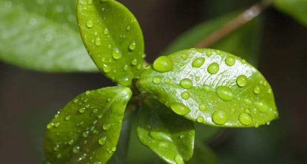 Растения и фотосинтез