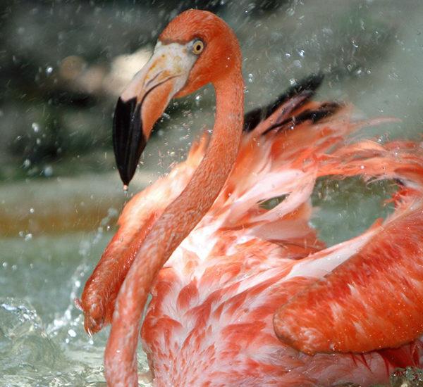 Птицы Мексики