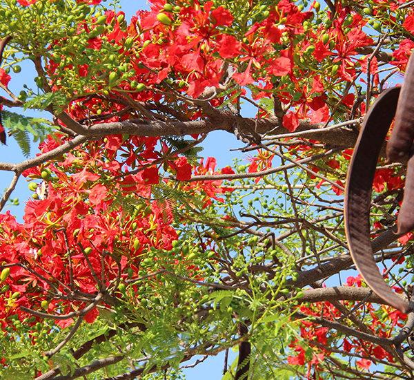 Растительный мир Мексики