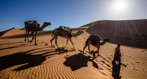 Верблюды в Сахаре